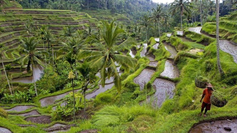 Bali_dyna