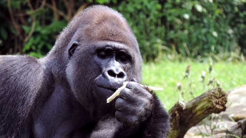 Gorilla & Game Trek - 15 Days - Valid: 24 Apr to 04 Dec.21