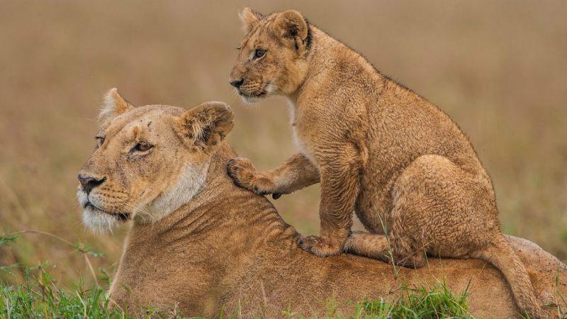 Kenya - Masai Mara - Ilkeliani Tented Camp - 4 Nights