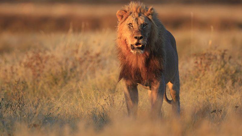 Namibia Highlights - Etosha - Swakopmund - Sossusvlei - 8 nights