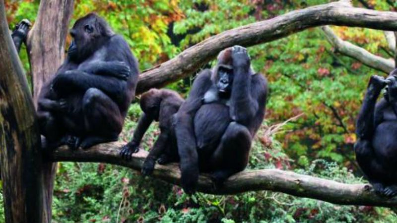 Uganda - Troop to the Gorillas