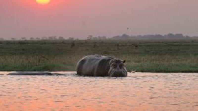 Victoria Falls and Chobe Combo - 4 Nights