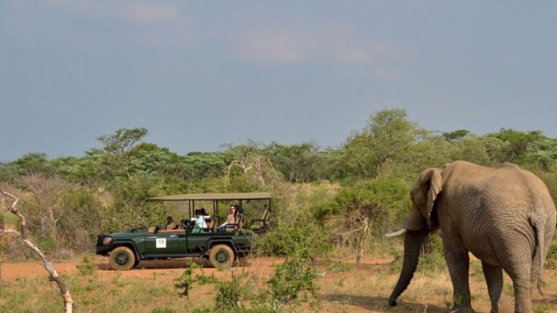 Photo of package Easter Safari - Limpopo - Mabula Game Lodge - Discounted Offer