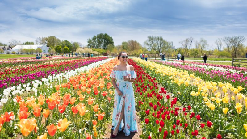 Photo of package Holland - Tulip Time Cruise - SAVE 30%- Book by 15 Dec.17