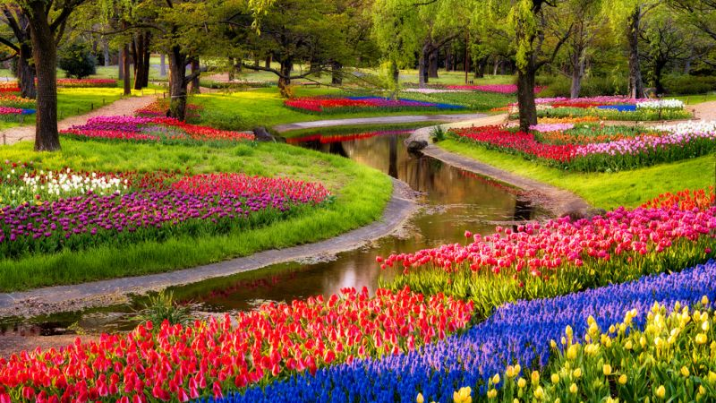 Photo of package Cruise through Authentic holland in Tulips Season!