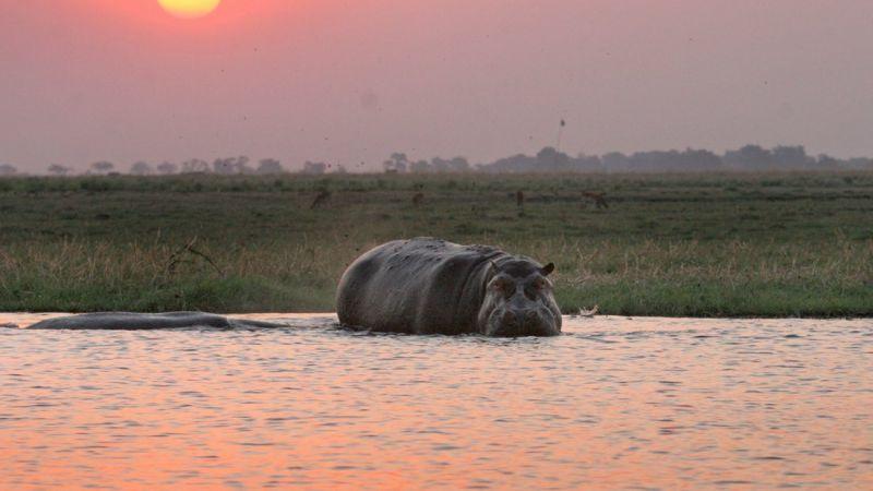 Photo of package Botswana -  4 star Chobe Safari Lodge - 2 Nights