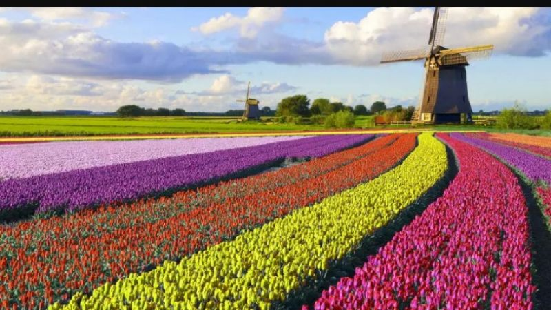 Photo of package Best of Holland - 7 Days - 1 Country - 8 Cities - Valid Apr - May.21