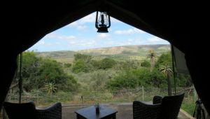 Eastern Cape - Amakhala Woodbury Tented Camp - 2 Nights