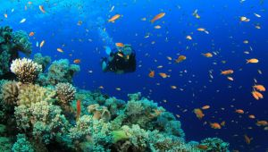 Diving in Vietnam - Nha Trang - 7 Nights