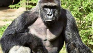 Uganda - Troop to the Gorillas - 6 Days