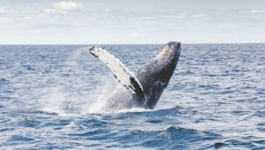 Western Cape - 4* Whale Coast Hermanus - 2 Nights