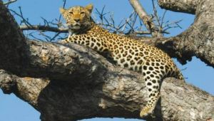 Best of Kenya & Tanzania - 11 days - 2 FOR 1 Discounted Tour
