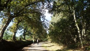 Spain - Walking the legendary Camino De Santiago - 8 Days