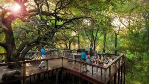 Madikwe - Jaci's Safari / Tree lodge - 4 Nights