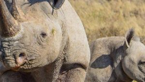 image of Botswana Family Safari with Teenagers - 10 Days - Valid: April - Dec.21