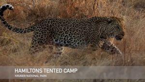 Kruger National Park - 4* Hamiltons Tented Camp - 2 Night Special Offer!