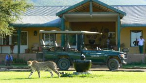 Groot Karoo - Samara Game Reserve - 2 Nights - Graaff Reniet- Valid until 28 Apr.21