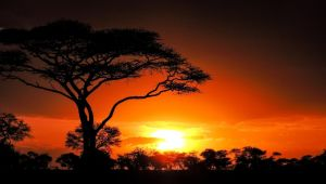Nairobi to Zanzibar - Serengeti & Sunsets - Set Dep: 26 Nov & 10 Dec 2021