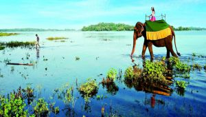 Sri Lanka Honeymoon -  7 nights - Valid Feb.19