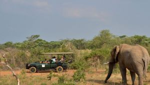 Safari - Limpopo - Mabula Game Lodge - 2 night getaway