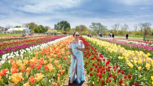Holland - Tulip Time Cruise - SAVE 30%- Book by 15 Dec.17