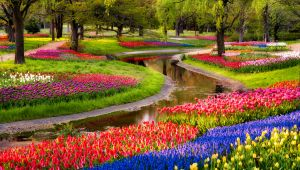 Cruise through Authentic holland in Tulips Season!