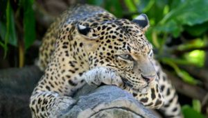Wild about Sri Lanka - 10 day tour - 25% Discounted Offer!
