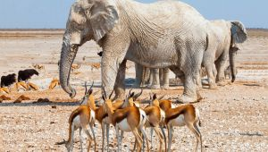 Namibia Highlights - Etosha - Swakopmund - Sossusvlei - 7 Nights