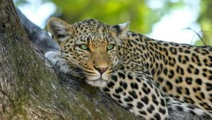 Wild about Sri Lanka - 10 Day Tour - 25% Off - Jan to Apr.20