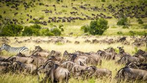 Kenya - Masai Mara Discovery Safari - July to October 2020