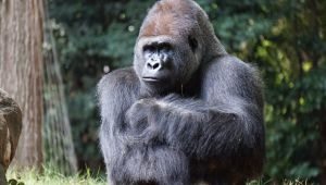 Rwanda - Gorilla Trekking Safari - 4 Days - Set Dep. 28 May.21