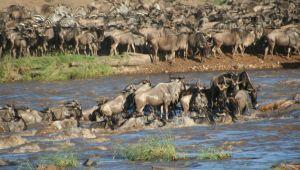 Tanzania Wildebeest Migration & River Crossing Safari  - 9-days