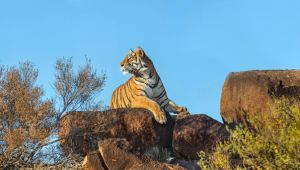 Karoo - 5* Tiger Canyon - 3 Nights