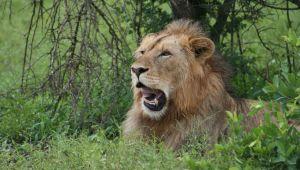 Kruger National Park - The Big Five - 4 days