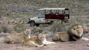 Southern Karoo - 4* Aquila Private Game Reserve & Spa - 2 Nights - Self drive