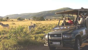 Pilanesberg - 4* Shepherds Tree Game Lodge - 4 Nights