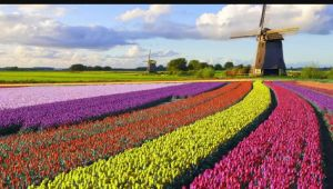 Best of Holland - 7 Days - 1 Country - 8 Cities - Valid Apr - May.21