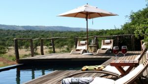 Eastern Cape - 4* Pumba Game Reserve - Msenge Bush Lodge