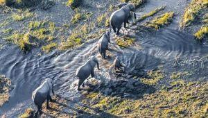 Botswana - Okavango Experience - 10 Days - Valid: 15 Jan to 26 Feb.21