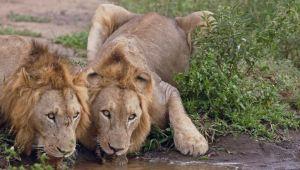 Kwazulu Natal - Amakhosi Safari Lodge - Mkuze - 2 Night Safari - Valid until 30 Sep.21