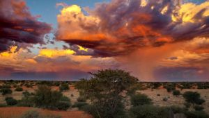 Thumbnail image for The Ultimate Namibia Experience - 11 Days