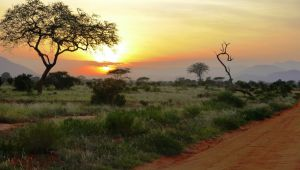 Kenya  - Bush & Beach – Tsavo & Malinda - 5 nights